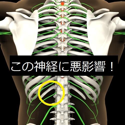 T12神経根