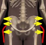 骨格図骨盤の開き