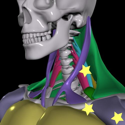 胸郭出口症候群箇所