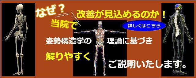 姿勢構造学バナ-