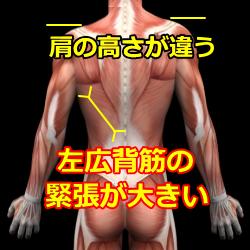 肩の高さ図
